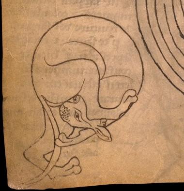 Détail du folio 14